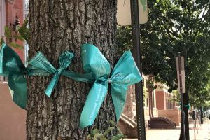 Trenton New Jersey Teal Ribbons Trees