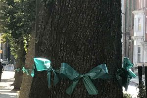 Trenton New Jersey Trees Teal Ribbons