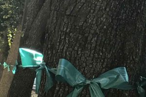 Trenton New Jersey Trees With Teal Ribbons