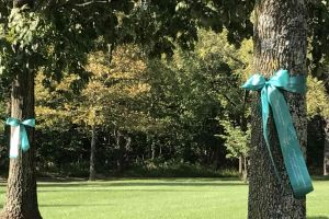 West Windsor New Jersey Ribbons On Trees