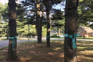 West Windsor New Jersey Ribbons Tied On Trees